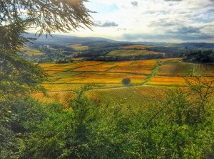 Autumnal colours in Burgundy vineyards