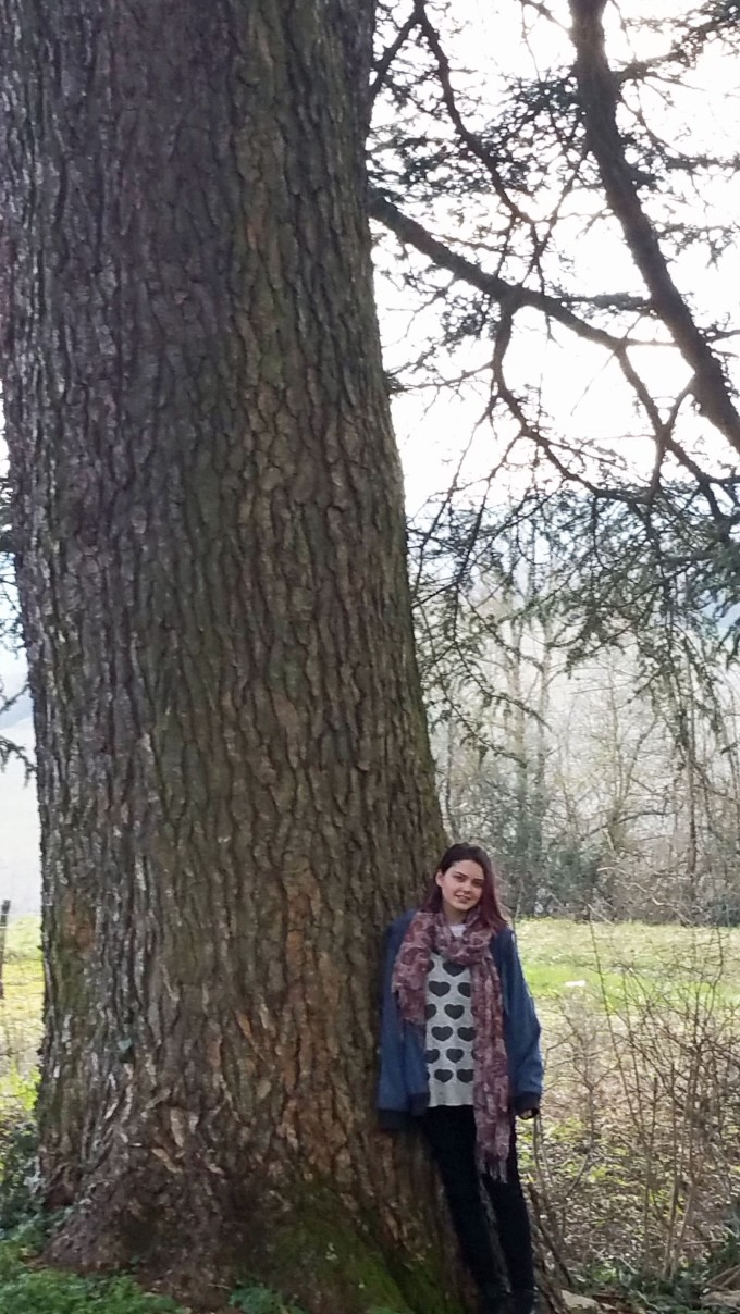 Cedar tree at the Domaine de Cromey